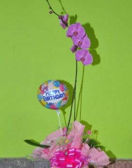 Phalaenopsis Orchid Gift Birthday Wrapped