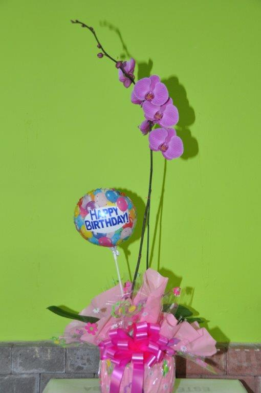 Phalaenopsis Orchid Gift Birthday Wrapped Shields And