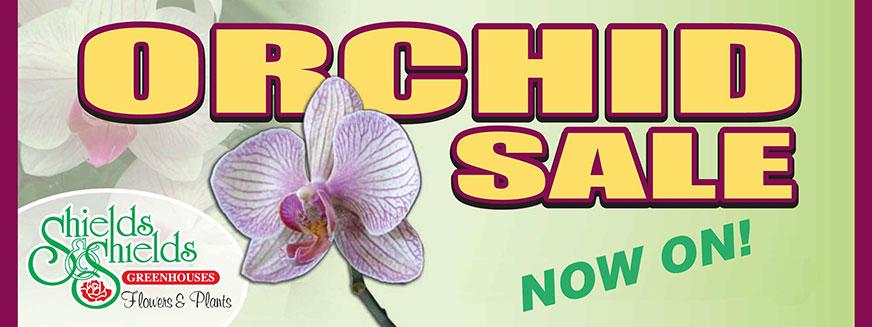 orchid-sale-banner